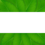 Eco background with fresh green leaves Stock Photos