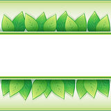 Eco background with fresh leaves Royalty Free Stock Photo