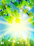 Eco background - green leaves, grass, bright sun. Royalty Free Stock Image