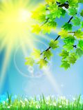 Eco background - green leaves, grass, bright sun. Royalty Free Stock Photography