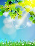 Eco background - green leaves, grass, bright sun. Stock Images