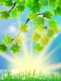 Eco background - green leaves, grass, bright sun. Stock Photo