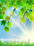 Eco background - green leaves, grass, bright sun. Royalty Free Stock Images