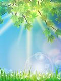Eco background - green leaves, grass, bright sun. Stock Photos