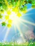 Eco background - green leaves, grass, bright sun. Stock Image