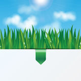 Eco background. Natural background.eco background.green grass with dew drops on a background of blue sky Royalty Free Stock Photo