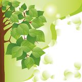 Eco background with tree. Place for text Stock Photo