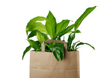 Eco bag. Isolated on white background royalty free stock image