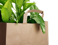 Eco bag. Isolated on white background stock images