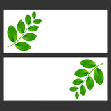 Eco banner  with green leaves  Vector illustration. Stock Photography