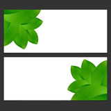 Eco banner  with green leaves  Vector illustration. Royalty Free Stock Image
