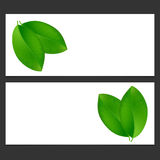 Eco banner  with green leaves  Vector illustration. Royalty Free Stock Photos