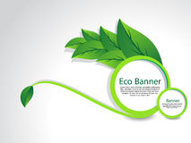 Eco Banner With Leaf. Vector illustration Royalty Free Stock Images