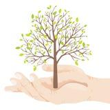 Eco Baum Lizenzfreie Stockbilder