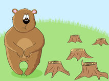 Eco bear. A sad brown bear looking at stumps after forest cutting down Stock Images