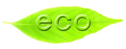 Eco Bild Lizenzfreie Stockbilder