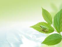 Eco-Bild Lizenzfreie Stockbilder