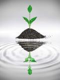 Eco blad fotografering för bildbyråer