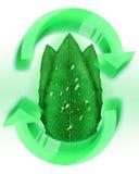 Eco blad med vattensmå droppar royaltyfri illustrationer