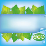 Eco blue background with fresh green leaves. Water drops and paper - place for text, vector illustration Stock Photo