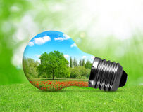 Eco bulb in grass. Royalty Free Stock Image