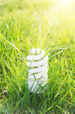 Eco bulb on green grass Stock Images