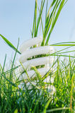 Eco bulb in green grass Stock Photo