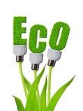 Eco bulb growing on plant Stock Photo