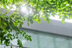 Eco byggnad eller inre för träd för gräsplankontorsväxt royaltyfria foton