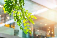 Eco byggnad eller inre för träd för gräsplankontorsväxt arkivfoton