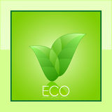 Eco card. Vector eco card in green design with green leafs Stock Photos