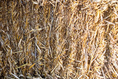 Eco clear hay bale. Agriculture field Wheat yellow golden harvest in summer Stock Image