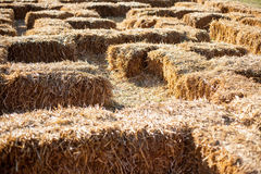 Eco clear hay bale. Agriculture field Wheat yellow golden harvest in summer Stock Photography