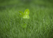 ECO Clover Royalty Free Stock Image