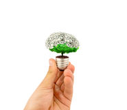Eco concept. Hand holding light bulb with plant and money inside Royalty Free Stock Photo