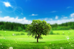 ECO Concept (Beautiful Tree landscape) Royalty Free Stock Image