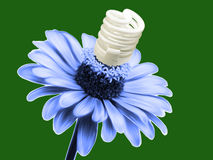 Eco concept flower lamp Stock Photos