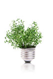 Eco concept: green plant is growing out of bulb Stock Images