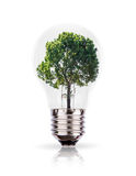 Eco concept: green tree in a light bulb. Stock Photo