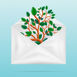 Eco concept. Green tree in paper envelope. Stock Images