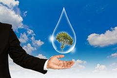 Eco concept : Hand hold water drop and tree Stock Photography