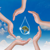Eco concept : Hand hold water drop and tree Royalty Free Stock Photo