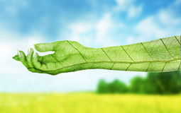 Eco concept. Hand of nature Stock Photos