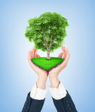 Eco concept. Hand of nature holding a big tree. Stock Images