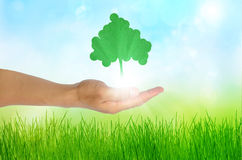 Eco concept Hand and one tree. Biology bird blue communication concept corporation design development royalty free stock photo