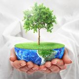 Eco concept. Hands hold a half planet with tree. Save the planet Royalty Free Stock Photography