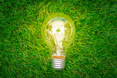 .Eco concept - light bulb grow in the grass Stock Image