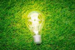 .Eco concept - light bulb grow in the grass Royalty Free Stock Photography