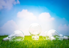 .Eco concept - light bulb grow in the grass Royalty Free Stock Photo