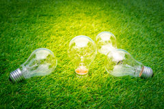 .Eco concept - light bulb grow in the grass Stock Photo